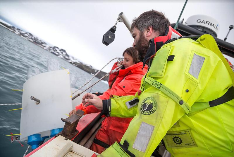 Descubren alto consumo de plástico en leones y lobos marinos chilenos
